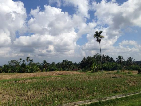 By Main Road Land At Tegallalang Ubud