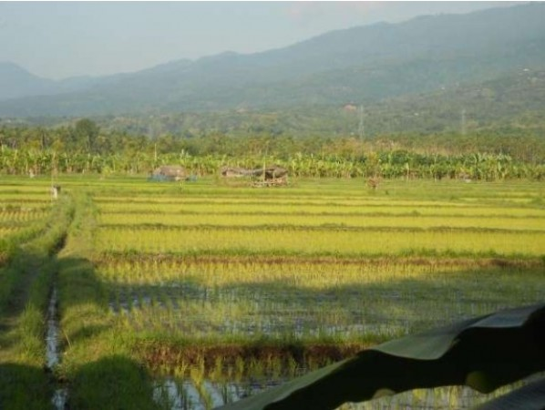 Mountain and Rice Field View Land For Rent At Singaraja