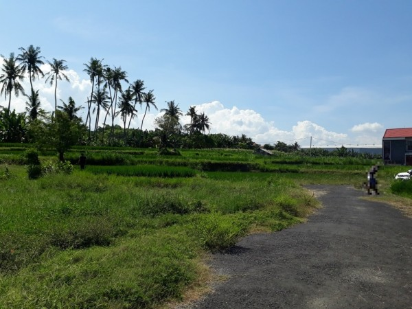 Land at Ketewel Gianyar Only 150 Meter To the Beach