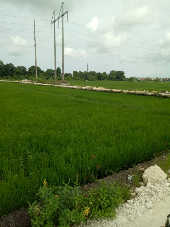 Land For Sale At Penyaringan Sanur