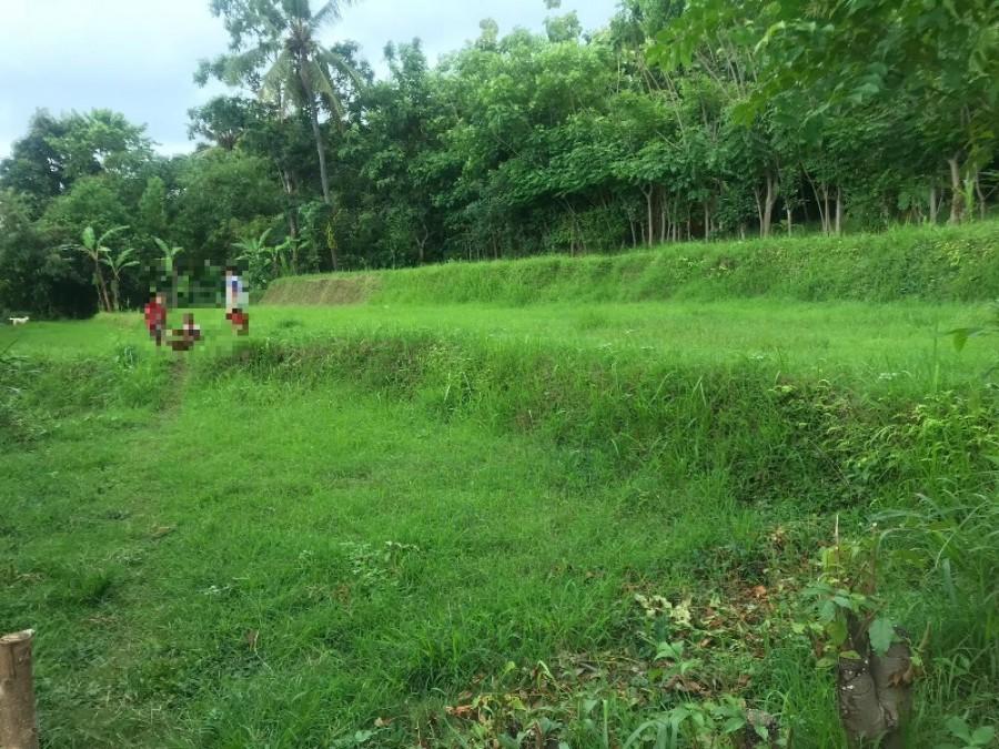 Land For Sale At Sukasada Singaraja
