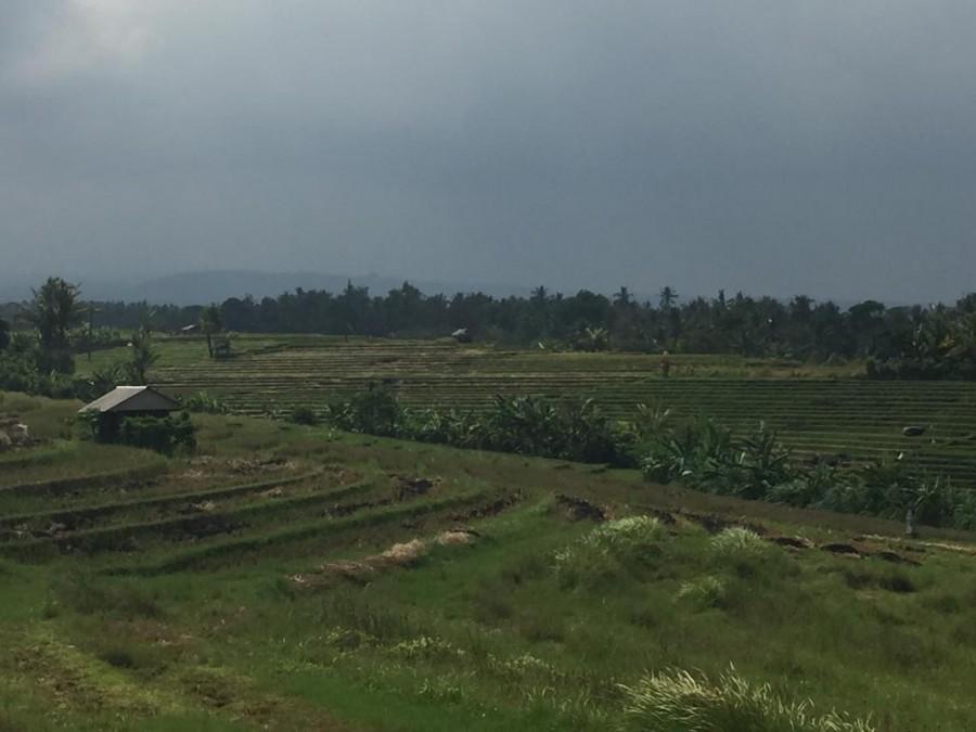 Land For Sale At Selemadeg Tabanan