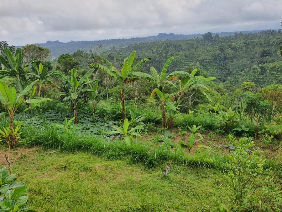 Land For Sale In Ubud Included Resort Planning