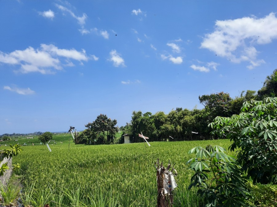 Rice Field View Villa For Rent In Munggu Area