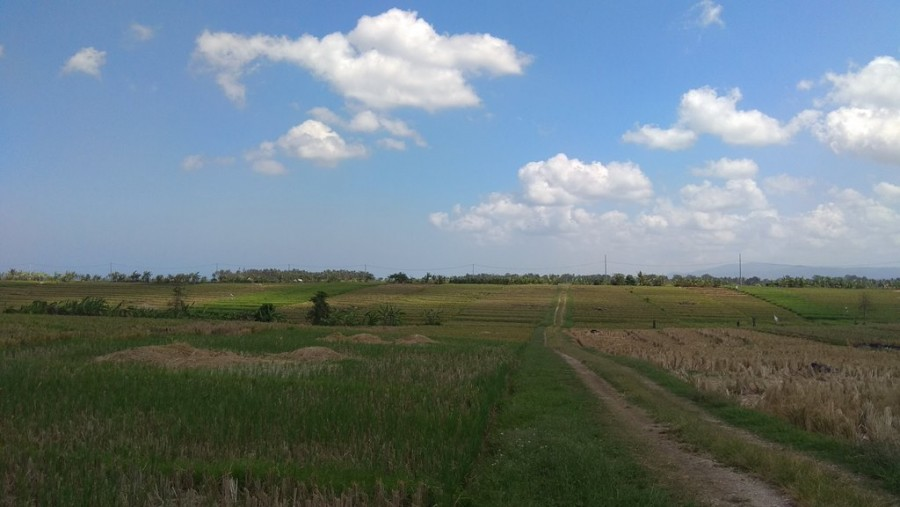 Rice Field View Land For Sale In Pasut Tabanan Villa Area